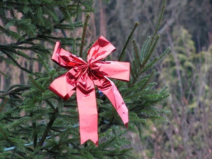 2012-Weihnacht-03